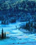 De Boom en het meer van de herfst in kanas Stock Fotografie