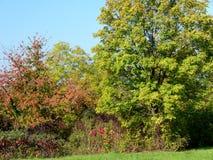 De boom en de struiken beginnen kleur in de herfst te veranderen royalty-vrije stock fotografie