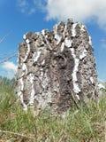 De boom en de witte wolken stock foto