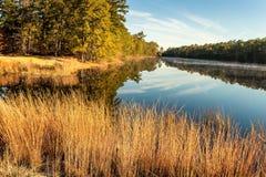 De boom gevoerde rivier royalty-vrije stock foto's