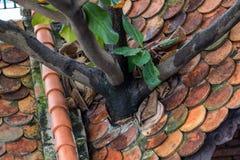 De boom groeit door het dak stock foto's