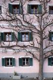 De boom groeit naast het huis stock afbeelding