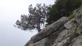 De boom groeit op een rots royalty-vrije stock foto