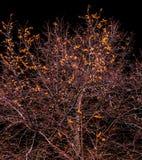 De boom groeit tegen de hemel royalty-vrije stock foto's