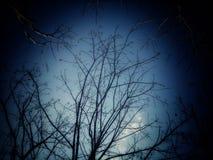 De boom, de hemel bij schemer, kijkt zeer eng stock foto