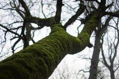 De boom in het bos verwierf een mos royalty-vrije stock afbeelding