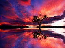 De boom in het meer wordt weerspiegeld dat royalty-vrije stock foto's