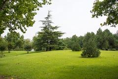 De boom in het park Stock Foto