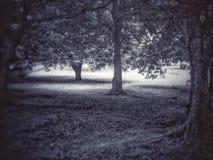 De boom kan spreken Royalty-vrije Stock Afbeeldingen