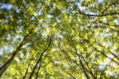 De boom kijkt op hemel Royalty-vrije Stock Afbeeldingen