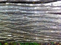 De boom is lichtbruin Stock Foto
