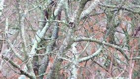 De boom met schimmel wordt behandeld slingerde lichtjes van de wind die stock videobeelden