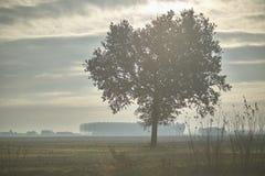 De boom in de mist Royalty-vrije Stock Afbeeldingen