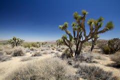 De boom nationaal park van Joshua Royalty-vrije Stock Foto's