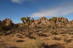 De boom nationaal park van Joshua Royalty-vrije Stock Afbeelding