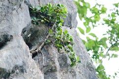 De boom is nieuwe generatie Royalty-vrije Stock Foto