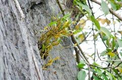 De boom is nieuwe generatie Royalty-vrije Stock Afbeeldingen