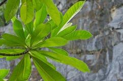 De boom is nieuwe generatie Royalty-vrije Stock Afbeelding