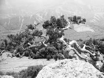 De boom op de bovenkant van berg Stock Foto's