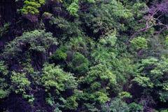 De boom op de heuvel royalty-vrije stock afbeelding