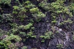 De boom op de heuvel royalty-vrije stock afbeeldingen