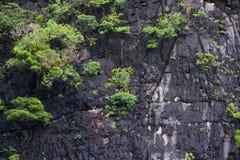 De boom op de heuvel stock afbeelding