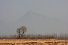 De boom op gebied Stock Foto's