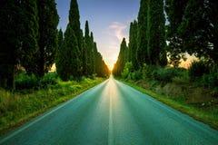 De boom rechte boulevard van Bolgheri beroemde cipressen op backlight s Royalty-vrije Stock Foto