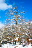 De boom sneeuwde in Legutiano Stock Foto's