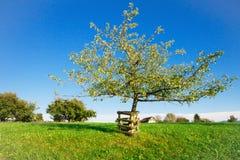 De boom van Apple in de tuin Stock Afbeeldingen