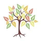 De boom van Autum stock foto's