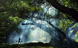 De boom van Banyan stock afbeelding