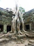 De boom van Banyan het groeien door oude tempel Stock Fotografie