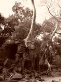De boom van Banyan het groeien door ruïnes Stock Foto's