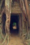 De boom van Banyan over de deur van Som van Ta. Angkor Wat Stock Fotografie