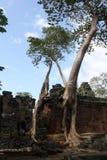 De boom van Bayon Stock Fotografie