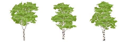De boom van de berk Bomen van Europa en Amerika royalty-vrije illustratie