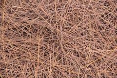 De boom van de bladerenpijnboom Royalty-vrije Stock Fotografie