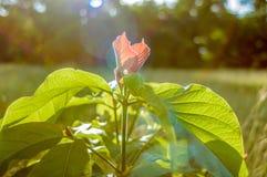 De boom van bloemen Royalty-vrije Stock Foto's
