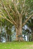 De boom van Bodhi met kleurrijke rond doek Stock Fotografie