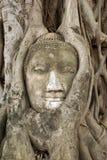 De boom van Boedha en van bodhi Stock Foto