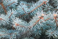 De boom van de close-uppijnboom royalty-vrije stock afbeeldingen