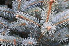 De boom van de close-uppijnboom royalty-vrije stock afbeelding