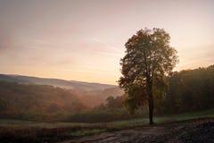 De boom van dalingskleuren op zonnige dag Stock Afbeeldingen