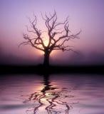 De boom van Dawn Stock Afbeeldingen