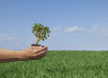 De boom van de aard. Royalty-vrije Stock Afbeelding