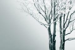 De boom van de afzondering Royalty-vrije Stock Afbeeldingen