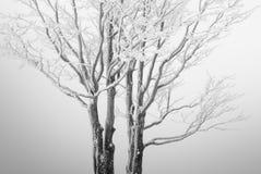De boom van de afzondering Stock Afbeeldingen