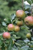 De boom van de appel stock foto