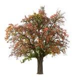De boom van de appel in daling royalty-vrije stock afbeelding